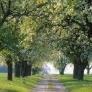 Deniz L - Spirit of the Spring  (Original mix)