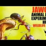 Jawoo - Experiment ()