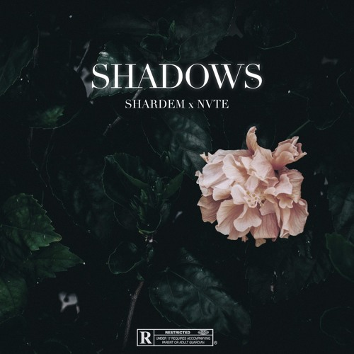 SHARDEM x NVTE - Shadows (Original Mix)