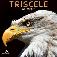 Triscele - EXT-IN (Original Mix)