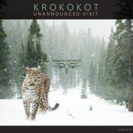 Krokokot - UFO Monitoring (Original mix)