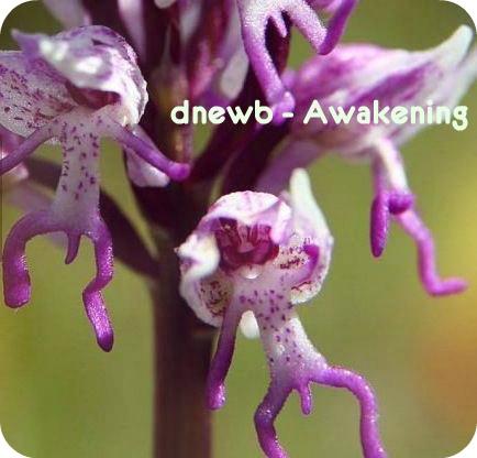 dnewb - Awakening (Original mix)
