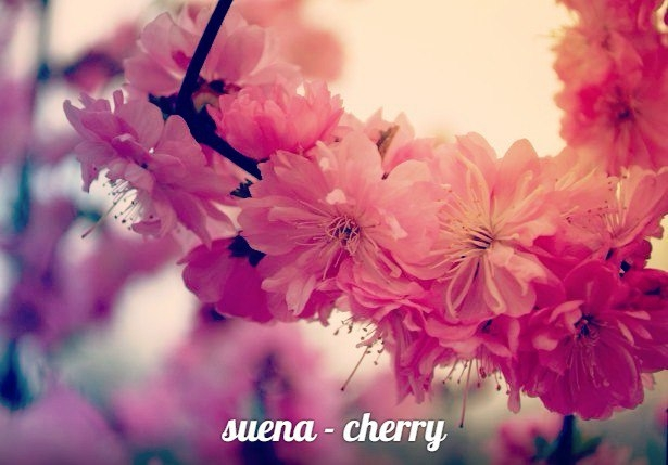 suena - cherry (Original mix)