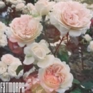 Fatmorph - Love (Original mix)