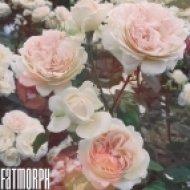 Fatmorph - Hope (Original mix)