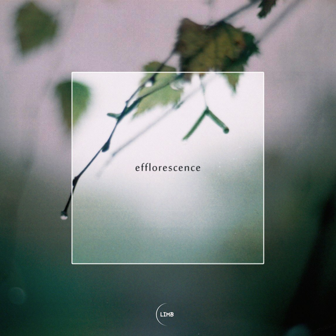 Bloom - Efflorescence (Original mix)