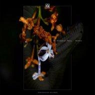 The Alchemical Theory - Eternal Return  (Original Mix)